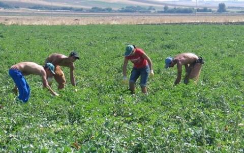 operai-agricoli